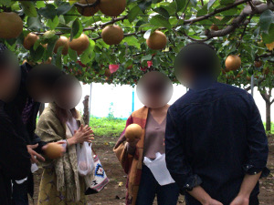 梨狩り中の男女